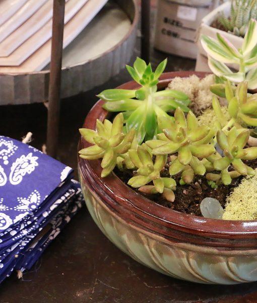 Plants - Starr Enterprises(4)