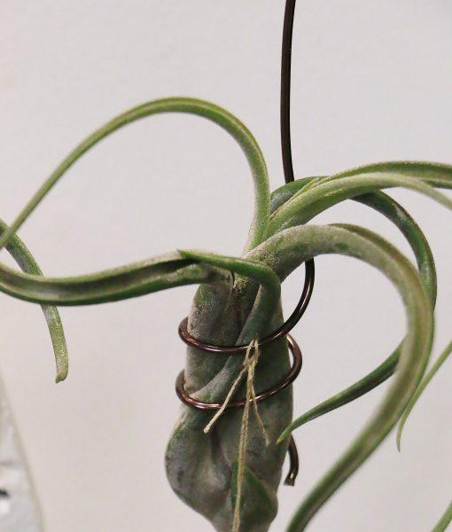 Plants – Starr Enterprises(6)