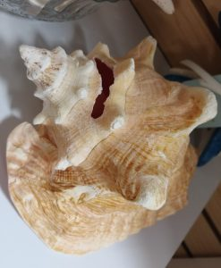 Sea Treasures(5)